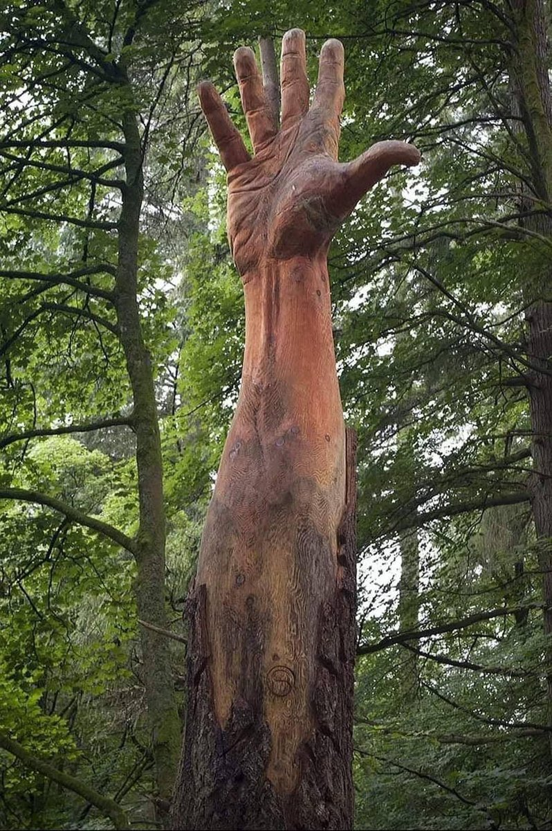The tallest tree in Wales got damaged by a storm and was supposed to be cut down, instead chainsaw artist Simon O'Rourke found a better solution to symbolise the tree's last attempt to reach the sky.