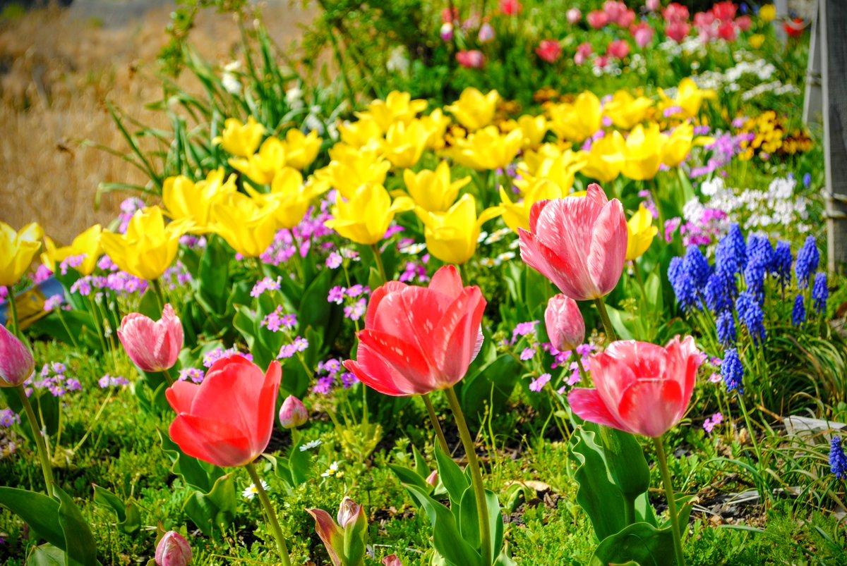 おはよ☺眩しい。。Shine of life  #Kyoto #Japan  #Camera  #photo #写真好きな人と繋がりたい #写真撮ってる人と繋がりたい #写真 #カメラのある生活 #ファインダー越しの私の世界    #photography #花 #flowers