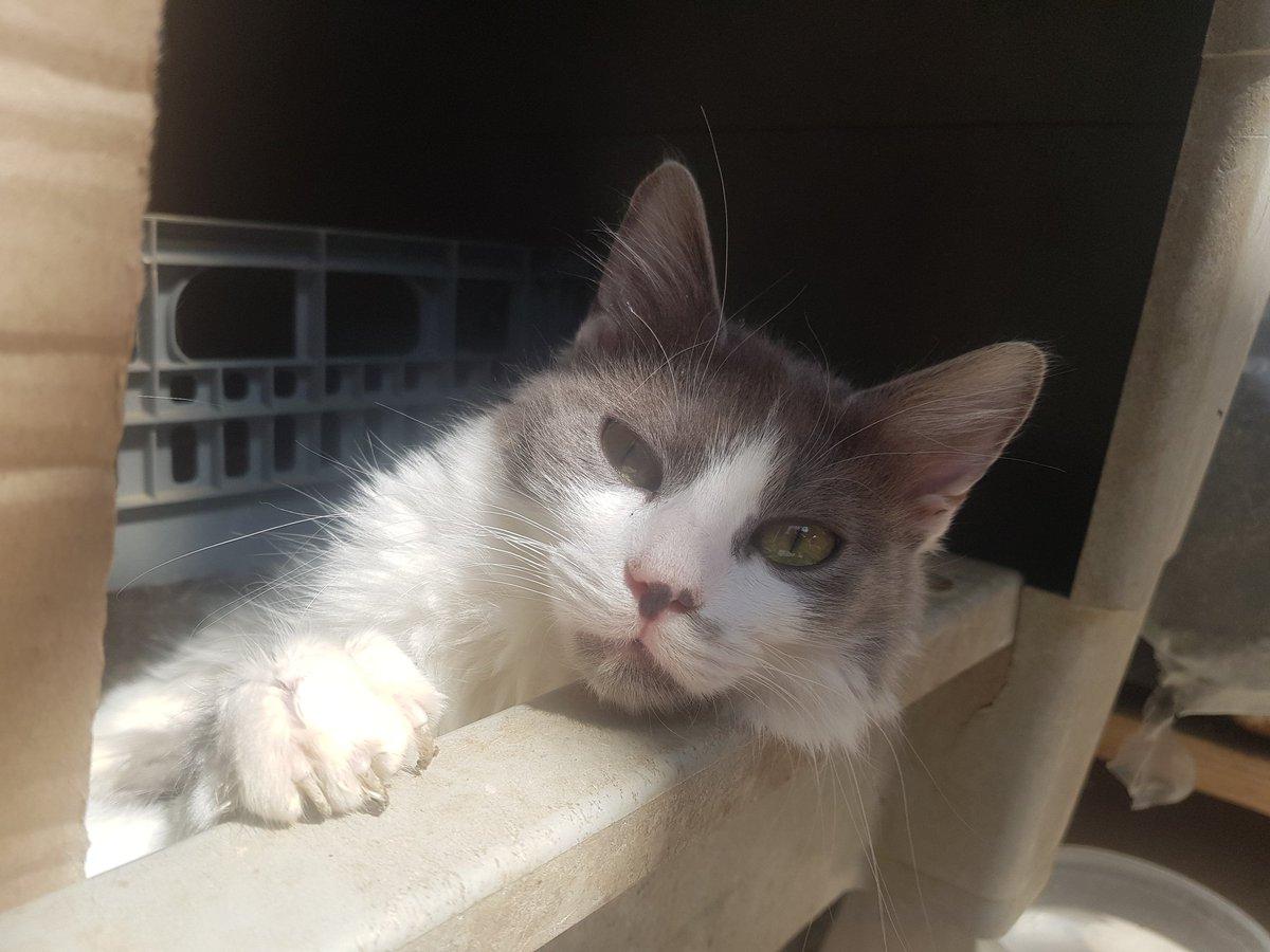 #cat #catsofinstagram #instagram #catlover #instacat #catlovers #kitten #kitty #meow #catoftheday #catlife #gato #kittens #cutecat #animal #catlove #catday #catsofcyprus #animallovers #catstagram #photooftheday #picoftheday #pictureoftheday #petsofinstagram #petportrait #kitten