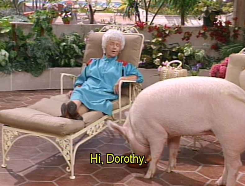 Today is National #Pig Day - and we're celebrating #Baby from #StOlaf!  Would you have adopted her? #GoldenGirls  #NationalPigDay #PigDay #Bacon #BeaArthur #EstelleGetty #RueMcClanahan #BettyWhite