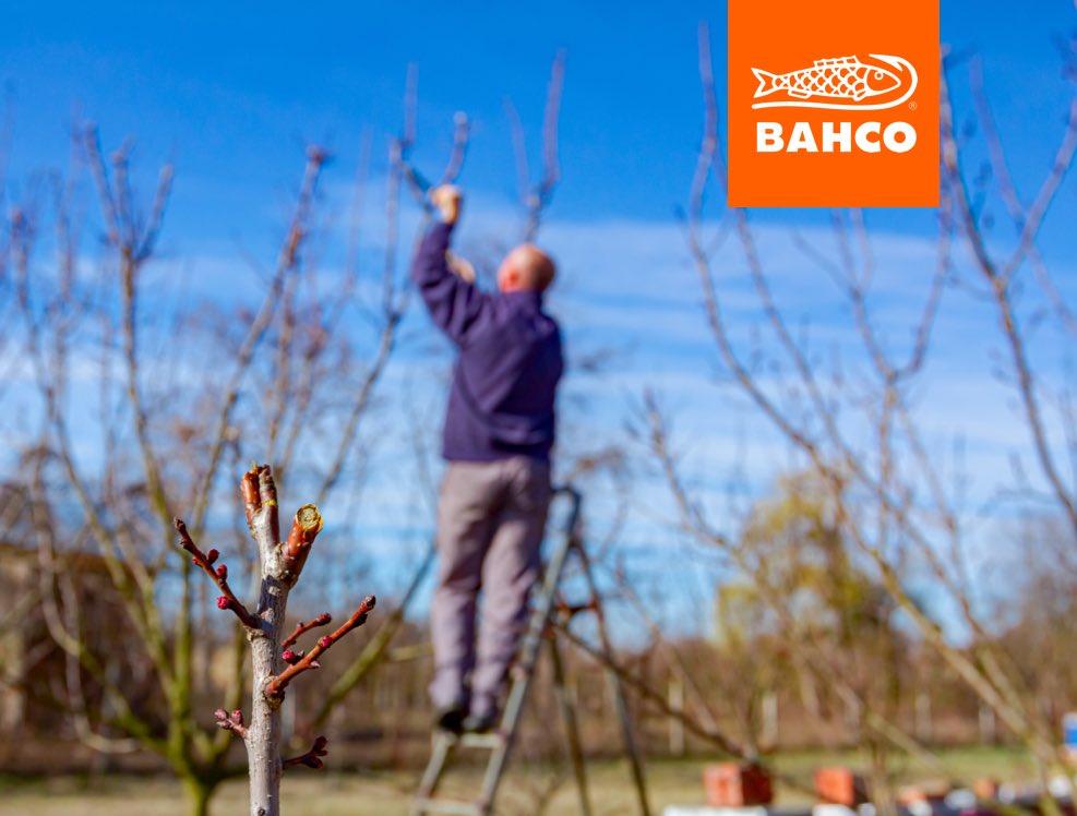 Bahco es tu aliado en la poda de árboles, cetos y arbustos. Sigue en #Facebook e #Instagram a @BahcoMx y conoce toda su línea de tijeras, cortasetos y poda de altura.