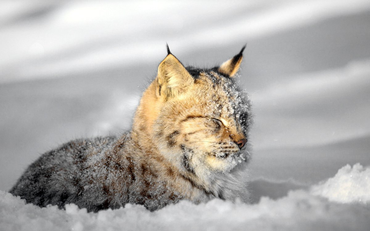 #cat #cats #catsoftwitter #catsontwitter #caturday #lovecats #twittercats