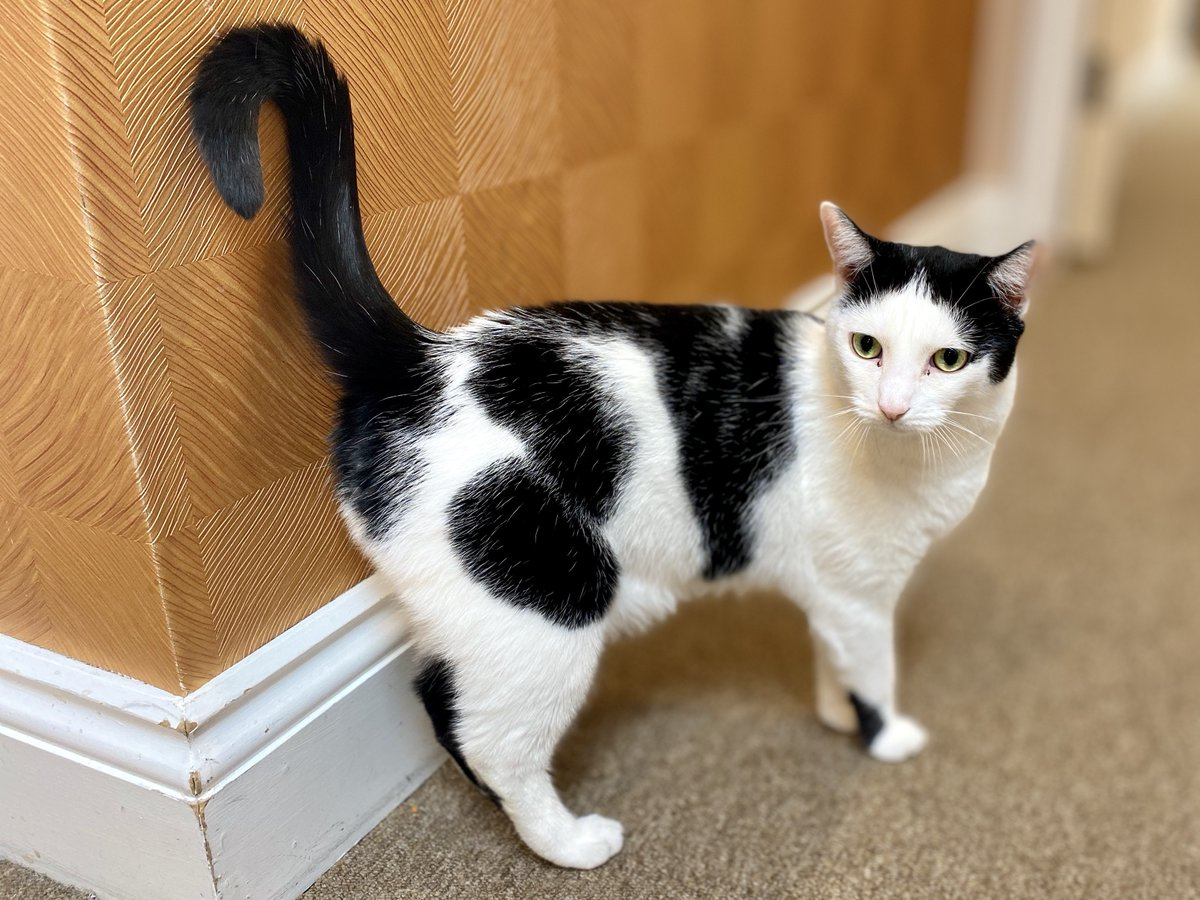 Named after the drink, Baileys is one of our furry family members here at #FoxholesCareHome!  She came to us after a staff member went out to do an assessment & the family needed a new home for their #cat.  #CareHome #Care #Cats #MeetTheTeam @BaileysOfficial