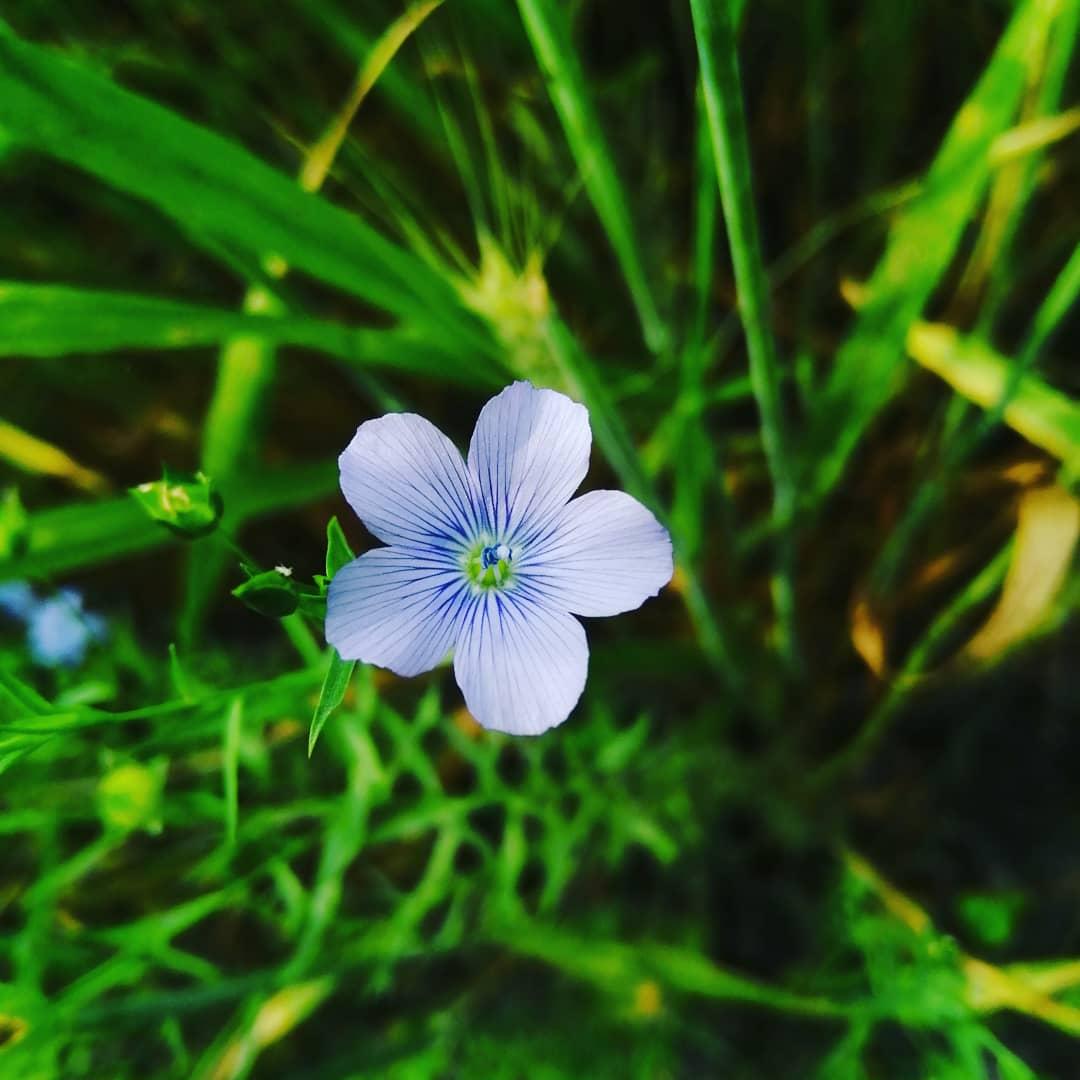 Look deep intonature, and then you will understand everything better. — #greenindia #naturalphotography #naturelovers #nature #mustardplant #skyphotography #savetheplanet #loveanimals #lovenature @krusader_photography