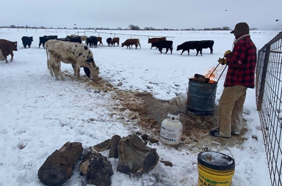 Were you impacted by the recent winter storms? @USDA offers programs that can help you recover. Also, we remind impacted producers to report losses. Learn more: https://t.co/boPqJg4BlA https://t.co/kW21SwVoMc
