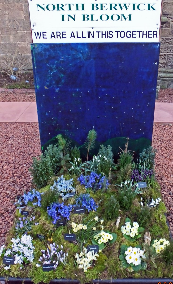 test Twitter Media - The pallet garden in the  High Street now features more early spring bulbs  such as crocus  and dwarf iris alongside   primroses. @TheCaley @KSBScotland #northberwick #ourbloom @RHSBloom @elcourier https://t.co/ftuzqD8nqL