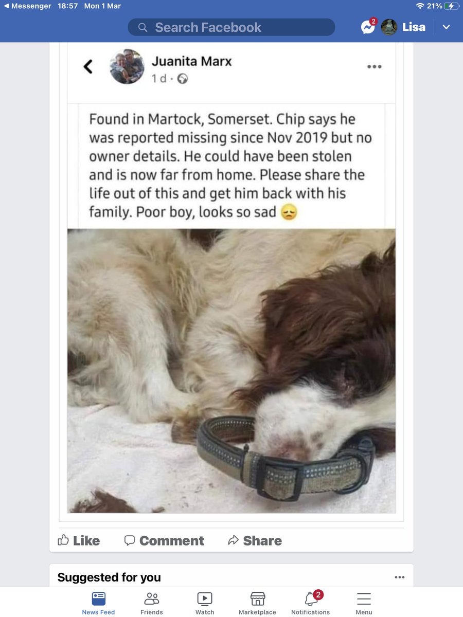 #dog found in #somerset his chip stakes he was reported #missing in 2019 hope his owner can be found🙏🏾 #dogsoftwitter   #spaniel #share #rt #rspca #pdsa #missingdog 💔