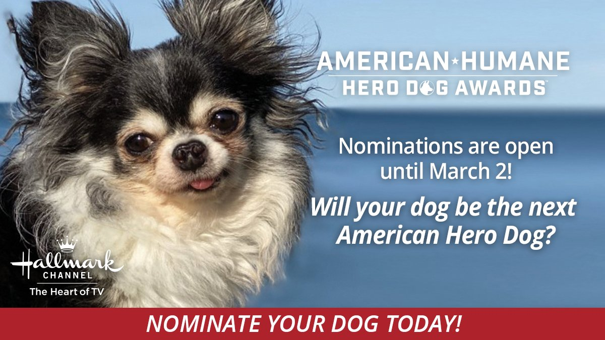 JUST 24 HOURS LEFT TO NOMINATE YOUR HERO! Your #dog does everything for you, so how about throwing 'em a bone by taking five minutes to nominate your best friend for the 2021 #HeroDogAwards? Go to ! #DogLovers #DogOwners #Dogs