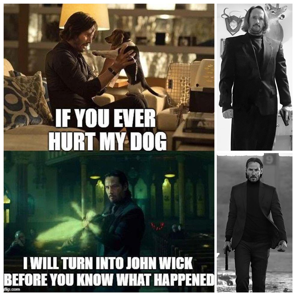"""I came across this Keanu Reeves' """"John Wick"""" meme, and I thought it was pretty cool since I'll do anything to protect my dogs.  So, I put on my black suit and did my best impression of him.  #MrLanSir #dogsoftwitter #sheltie #shelties #dogs #LanSir #dog #keanureeves #johnwick"""