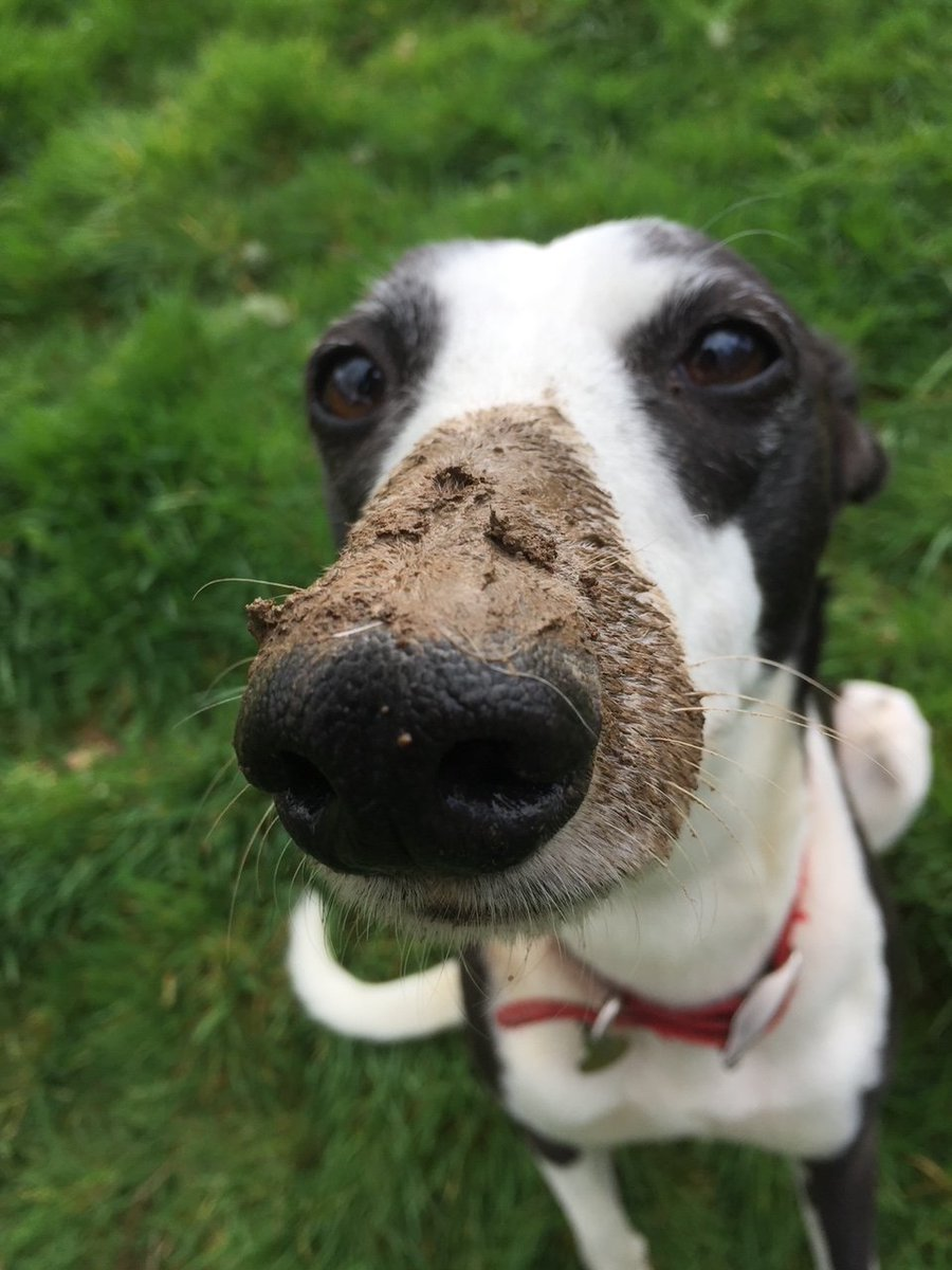 Puppy or adult dog problems? Solutions that work for your #dog. Available now in individual consultations, UK wide #DogTraining ONLINE with the national treasure The Devon Dog Lady. 07967 735067