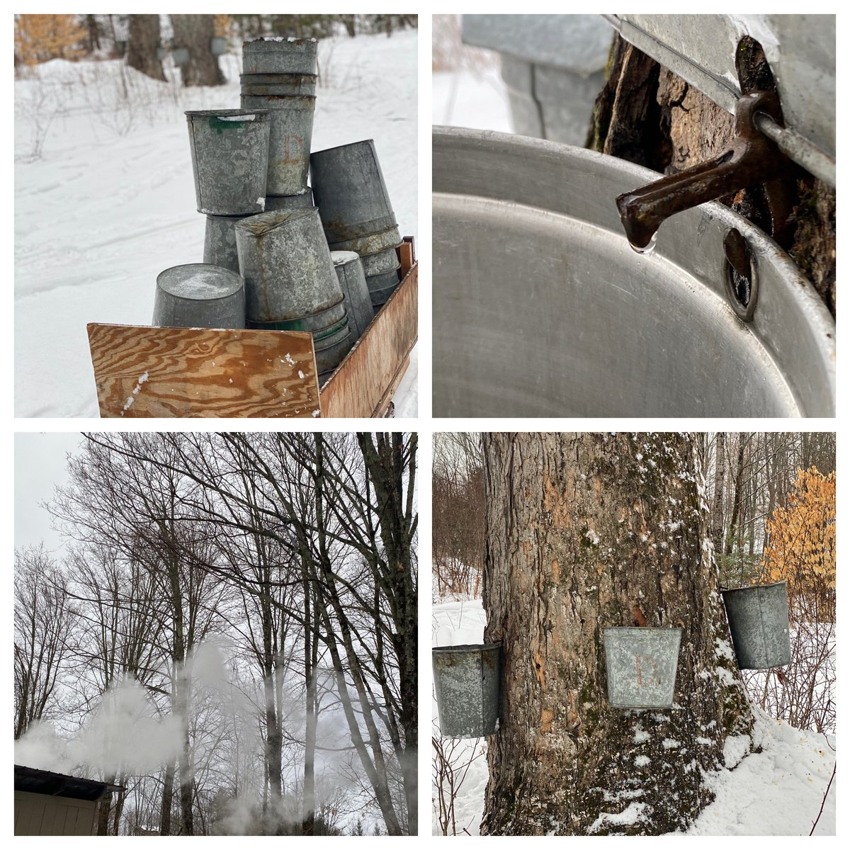 It's that time of the year and the sap is running!  #maplesyrup #liquidgold #vermontmade #familysugarhouse