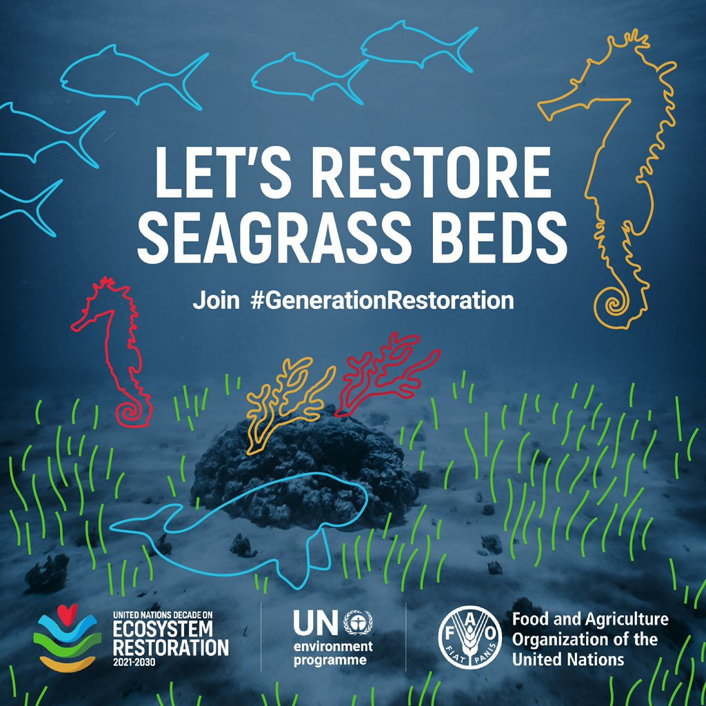 💙 Happy #WorldSeagrassDay! 💙  #DYK that seagrass beds are important for #ClimateAction and store up to 18% of oceanic carbon?  For #SeagrassDay, @UNEP explores efforts to restore seagrass in the Western Indian Ocean Region.  ➡️   #GenerationRestoration