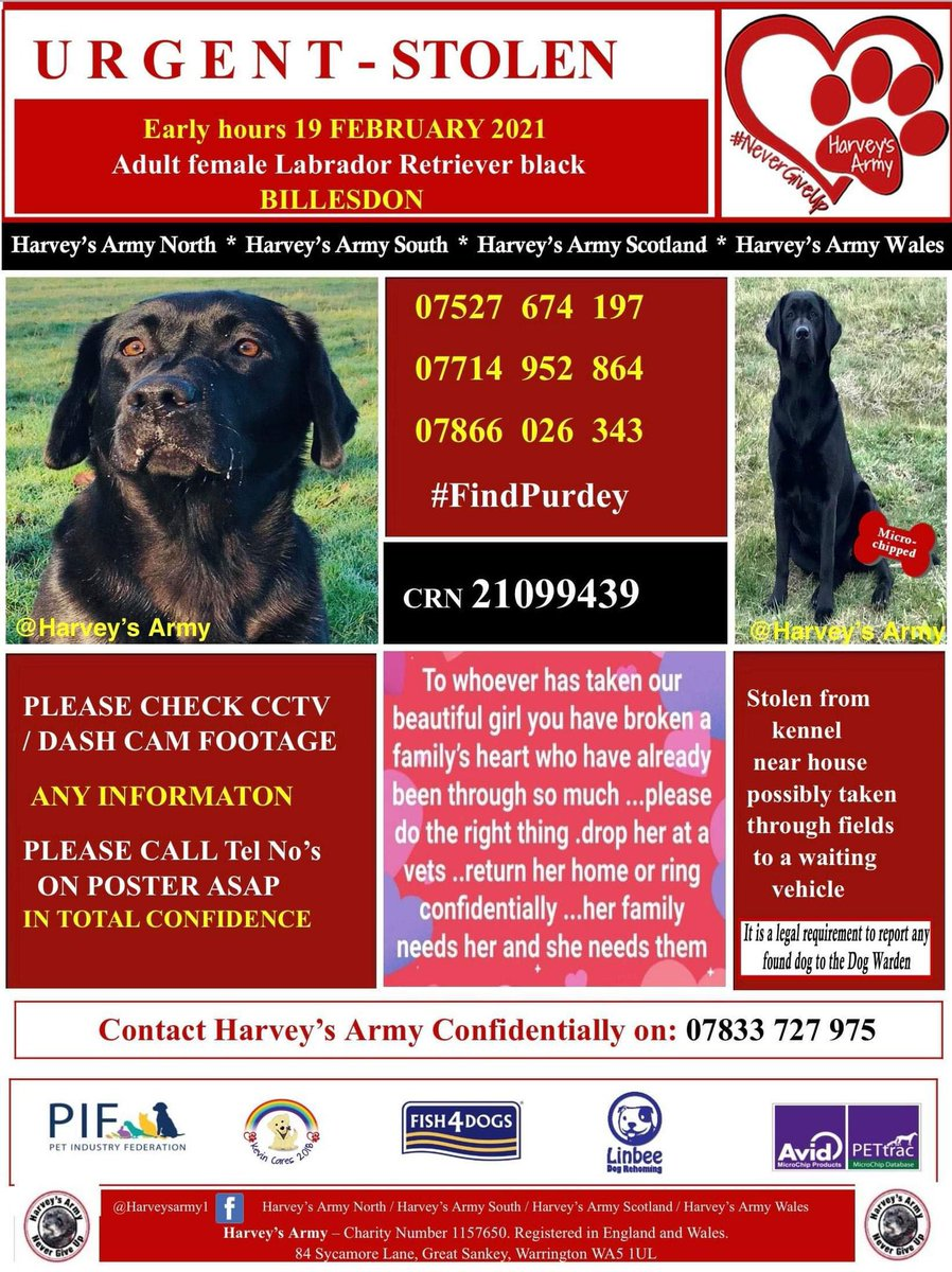 #findPurdey  TAKEN WHEN OWNERS SLEPT In the early hours...19/2/21 adult/female #labradorretriever  PURDEY IS BLACK WITH A DISTINCTIVE RIDGE OF HAIR RUNNING DOWN HER NOSE  Was she taken through nearby fields to a waiting vehicle? She would of been so scared #LE7  We need your help