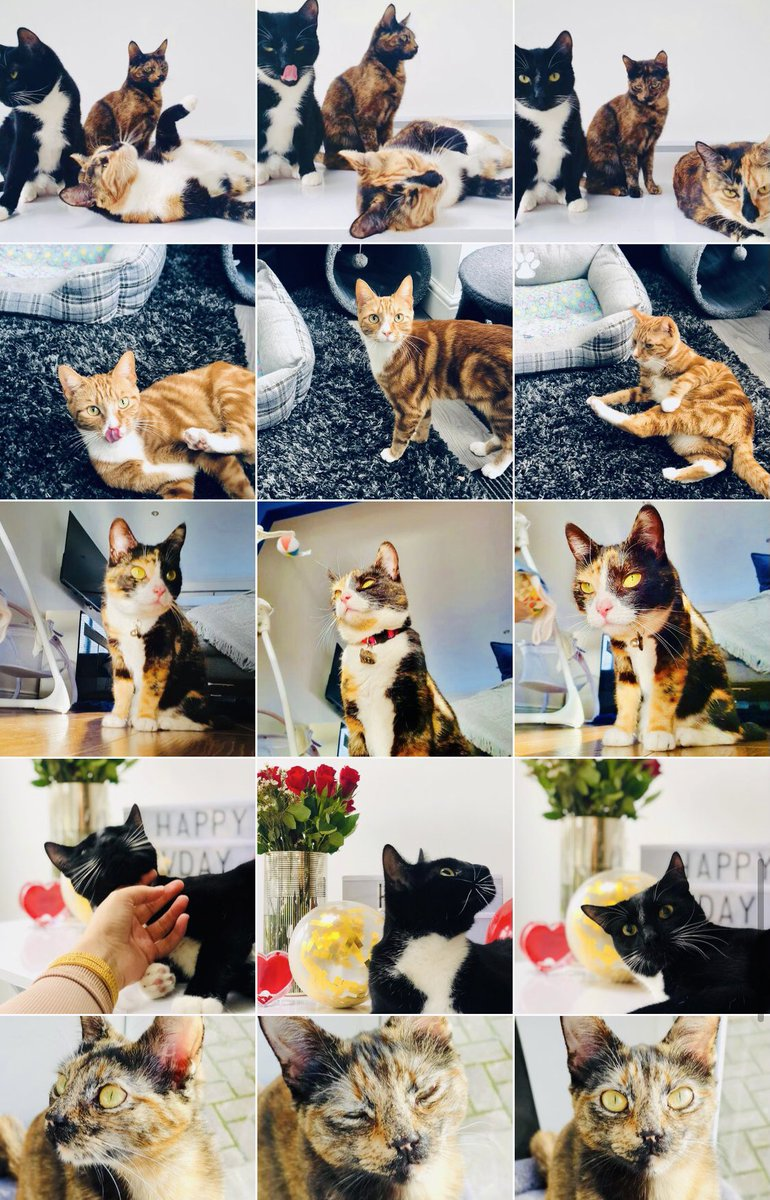 @juliableck1 Hey! 💗   My website is for cat owners/lovers. It features my own 6 ADORABLE cats living their best life. 😻  🐾 Website:   🐾 Twitter: @MeowzineUK  🐾 Instagram :   #WritersLift #WritingCommunity #BloggingCommunity #Blogs