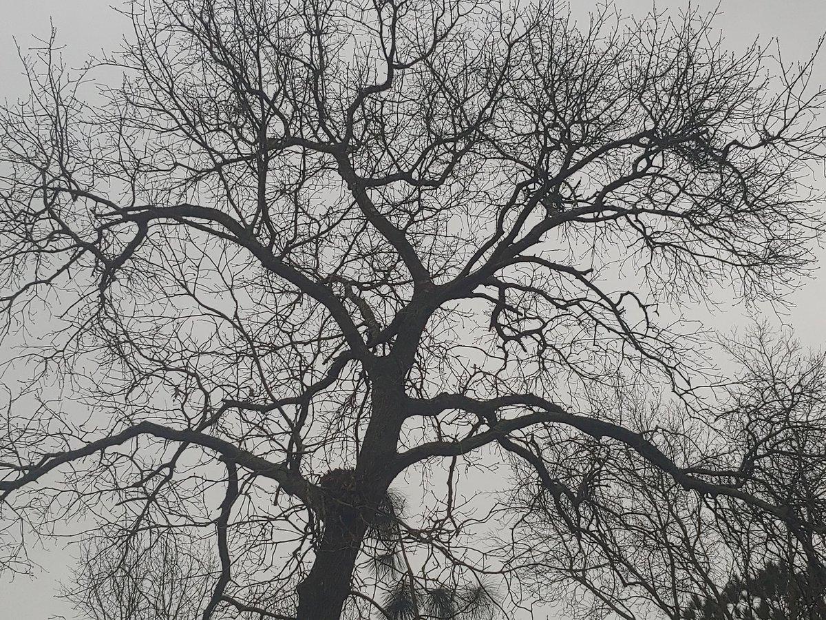 #Winter #Oak #Purple #Crocus #Cinnamon #Lenten Rose (#Hellebores) #Inthegarden