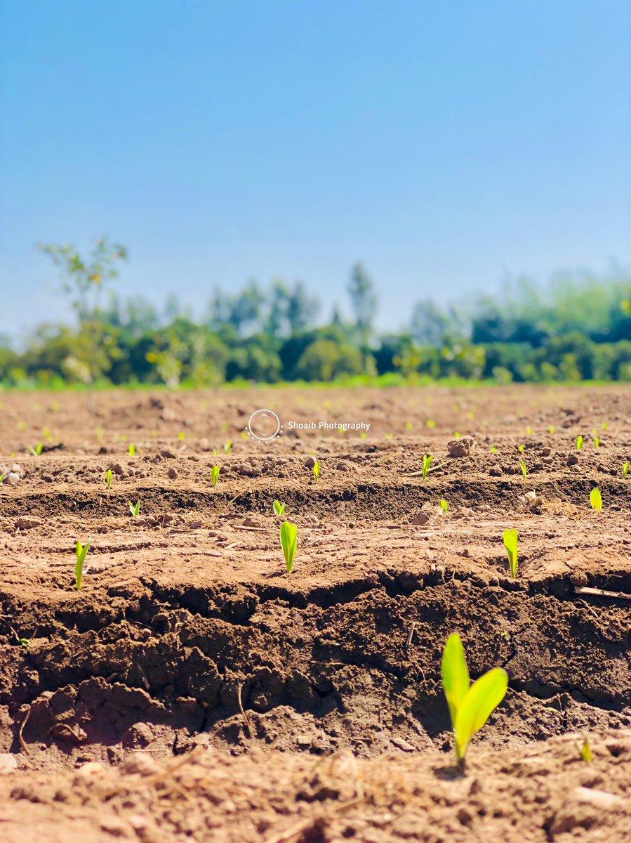 Post of the day   #barmusa #shoaib_riaz #photooftheday #instagood #nofilter #tbt #shoaibphotography #picoftheday #instagram #orange #love #instapic #instadaily #mandibahadduin  #instamood #followme #likeforlike #like4like #follow4follow #followforfollow #f4f #field #green #farmar