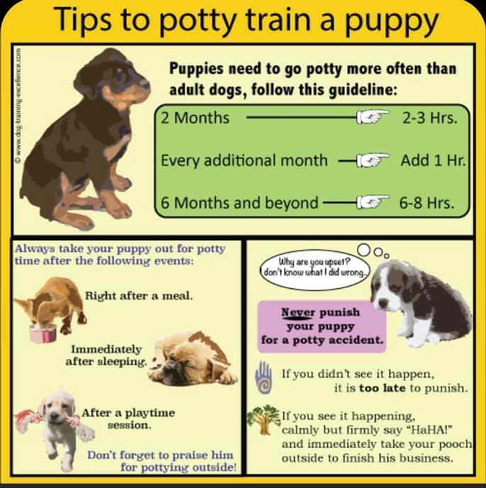 Training Tip Tuesday:   Tips to successfully potty train your puppy.   #TipTuesday #PottyTraining https://t.co/Vjxqw8hBc6