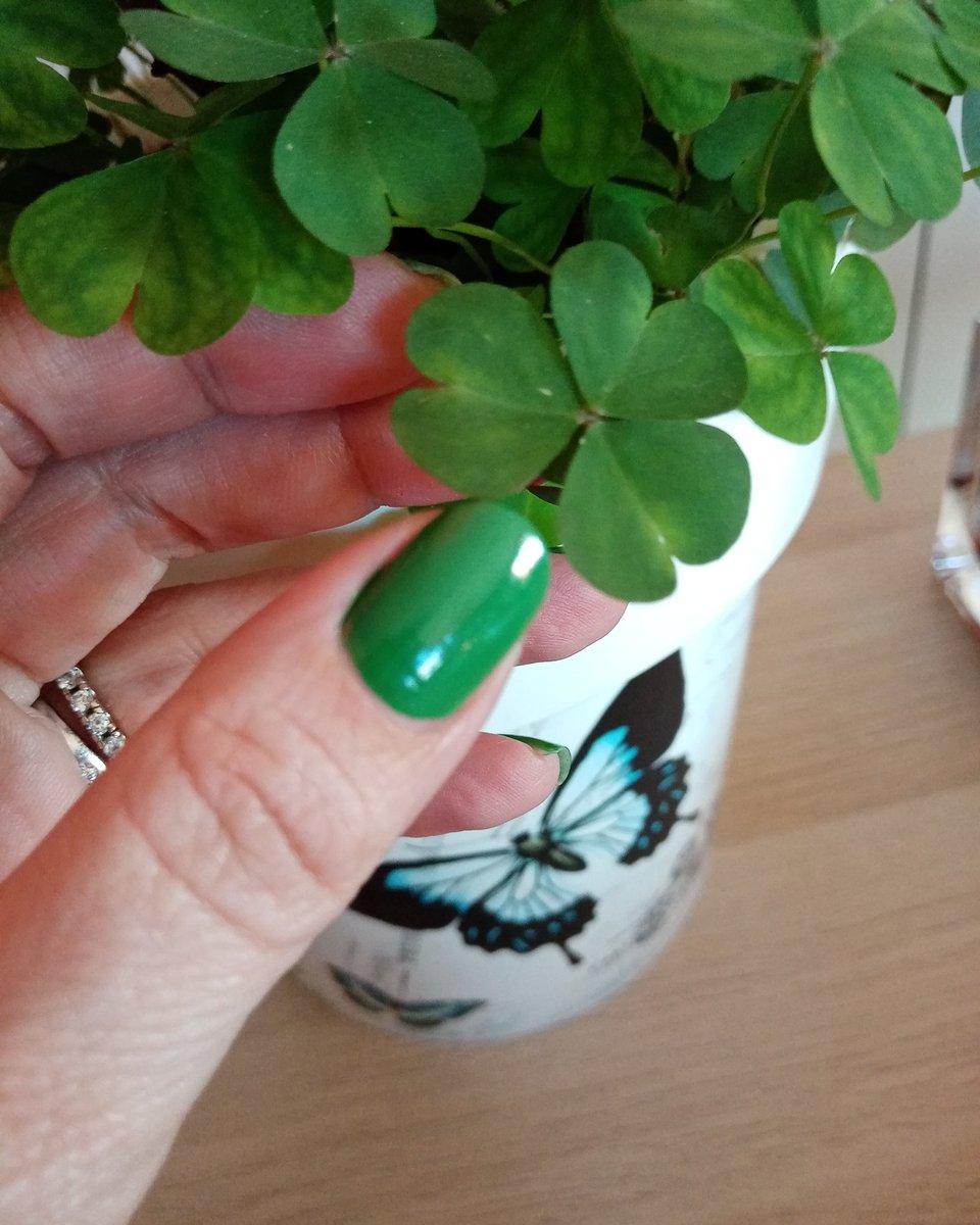 Trifogli ☘️ sono cresciuti spontaneamente bellissimi 😍 smalto verde di #Avon  #green #plants #trifoglio #instagood #photoOfTheDay #instalike #TFLers #embraceYourDay #hope #lucky 🍀 #perTe #perMe 🦎