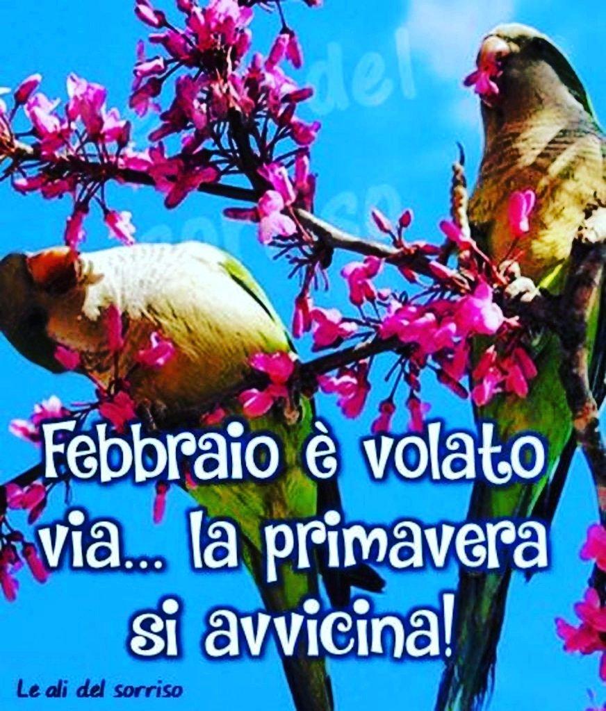 #febbraio é #volatovia ... La #primavera #siavvicina #bestoftheday #follow #fun #gang_family #golook #gramoftheday #bird #birds #instabird #birdgram #mazingando #lelexxii