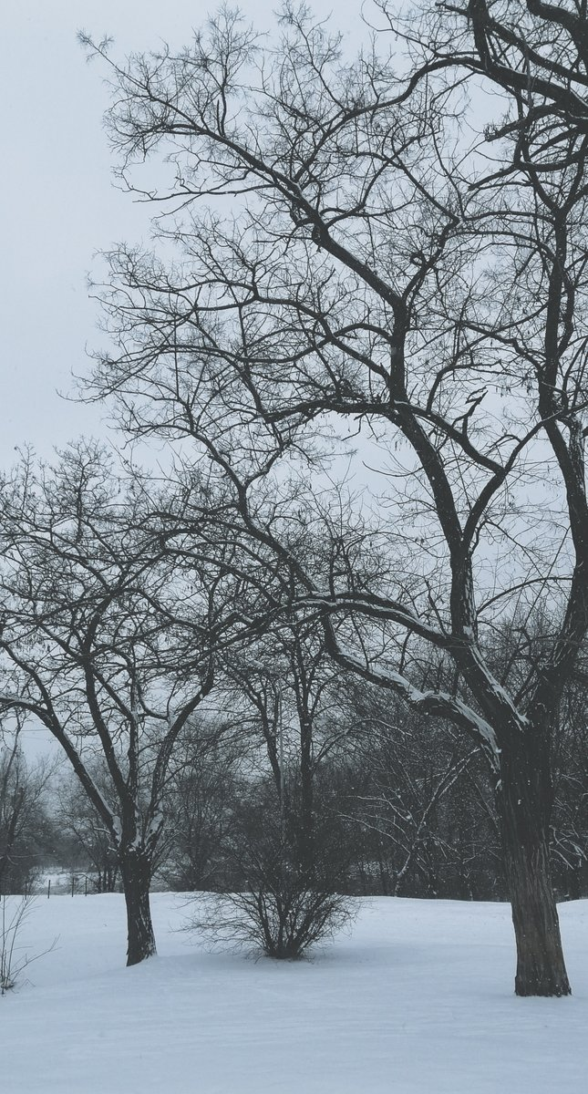~ my soul is the snowflakes, frosty winds, clouds, the days of grey and blue, silence of the streets and yearning for the woods, the swirling darkness of the dusk, a bit of mist and the sunsets ablaze... /*click for full pic*/ #melancholy #atmospheric #cold #winter #snow #trees