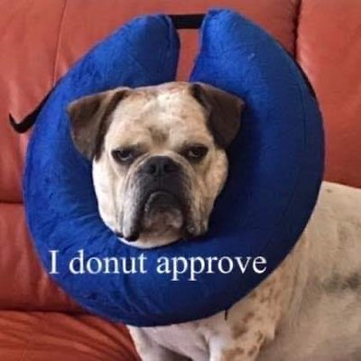 #NewProfilePic I'd ❤️ 2 reach 10k followers by my birfday in April. Gotta plan ahead. You should follow me. I'z cutez. #FolloMe #dogsoftwitter #dogs #dogsofinstagram #tuesdaymotivations #tuesdayvibe #TrendingNow #cute #COVID19 #donut #donutthink #RETWEEETME #RetweeetPlease