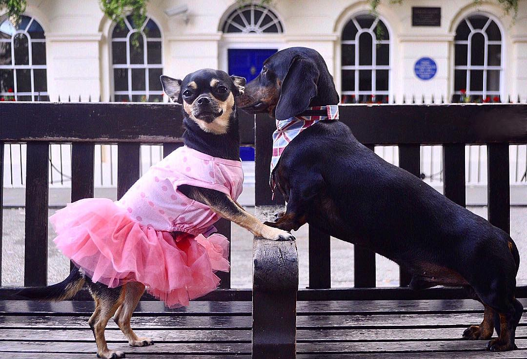 Love is in the Air🐶🥰🐕  @dolly_pawton  #myfurriesindia #doglovers #dogs #pets #dogsoftheday #doglove #lovers #dogstagram #dogsofinstagram #dogsofinsta #petsofinstagram #petsagram #petstagram