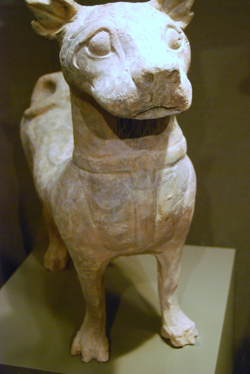 A molosser dog from Han Dynasty - 2nd century BC / 2nd century AD #dogs #dogsoftwitter #China #Asia #beautiful #Twitter #Archaeology #beauty #love #art #photography #History #picoftheday #pottery #DogecoinToTheMoon #dogsarelove #pictures