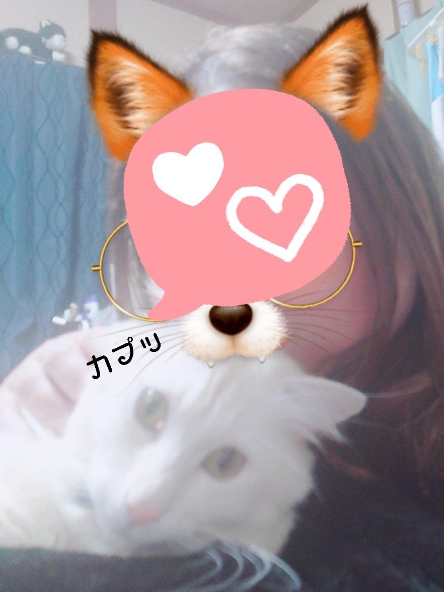 心羽と記念撮影📷 可愛すぎる🥰 #ラガマフィン #猫好きさんと繋がりたい  #猫のいる暮らし  #猫のいる幸せ  #snow