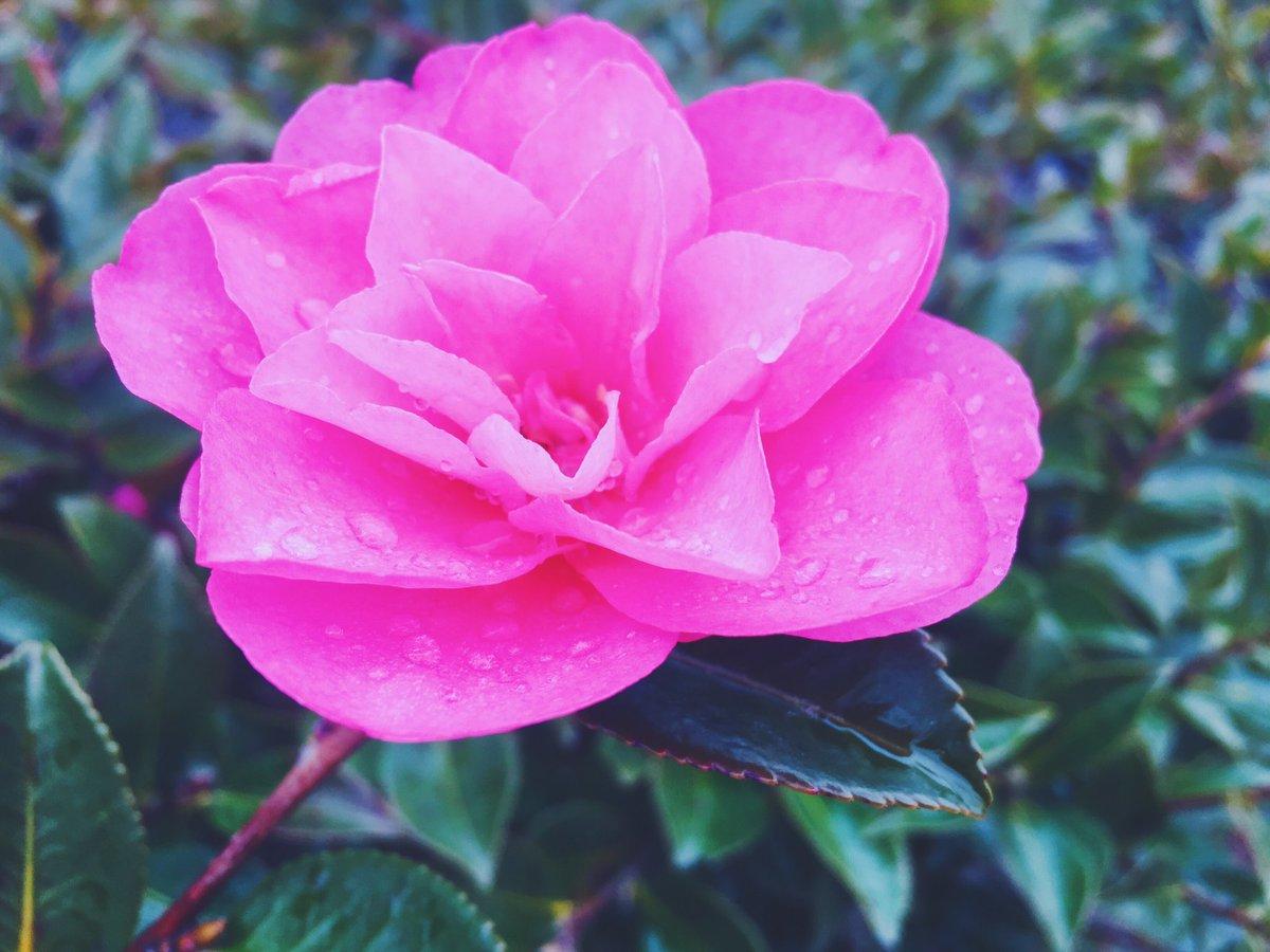 傘と長靴を新調してご機嫌な娘とお散歩♡  #春 #雨 #お散歩  #spring #flower #japan  #iPhone #iPhoto  #coregraphy #photography  #vsco #vscocam