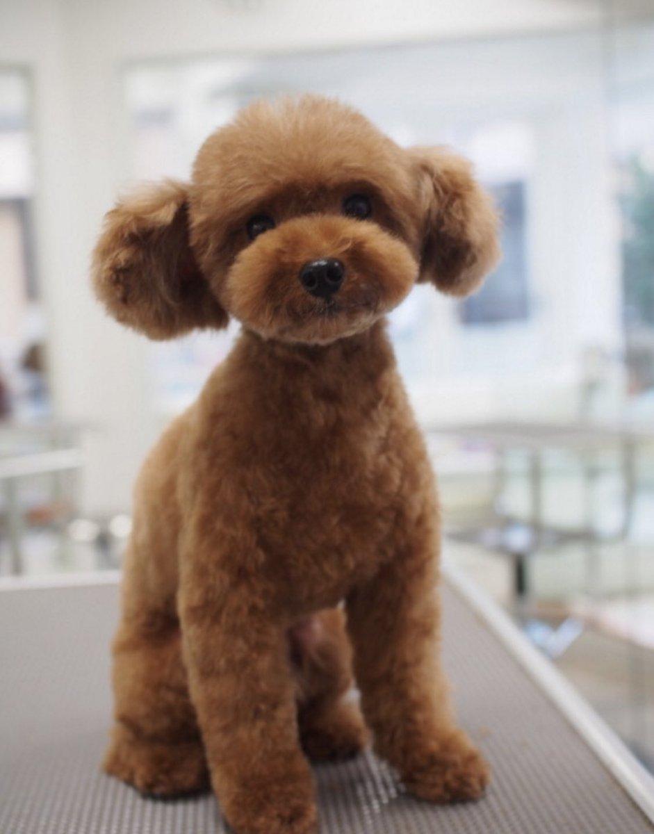 ヘアスタイルで印象って変わる…それは犬さんも同じ!トリミングから帰ってきたら誰だか分からないレベルに!