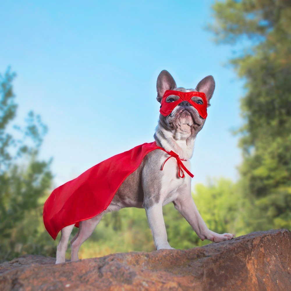 Let's celebrate all you superhero fur-mums out there!   We want to see your cute OR funny pictures/videos of your pets ✨ Share them with us in the comments of this post..  Get a jewellery piece dedicated to your pet here 👉