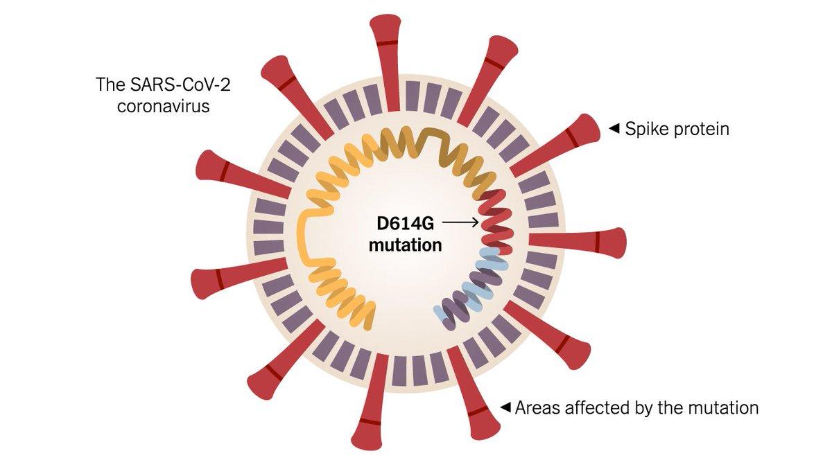 @CDeutschlaender @dwmerkur @CHHollender 4/4 @Nature #lockdown fördert Ausbreitung ansteckenderer #coronavirus #mutation!  EU Studie zu #mutations nach 1. #lockdown   Review: Mechanisms & Concepts in RNA Virus Population Dynamics & #Evolution  #covid19