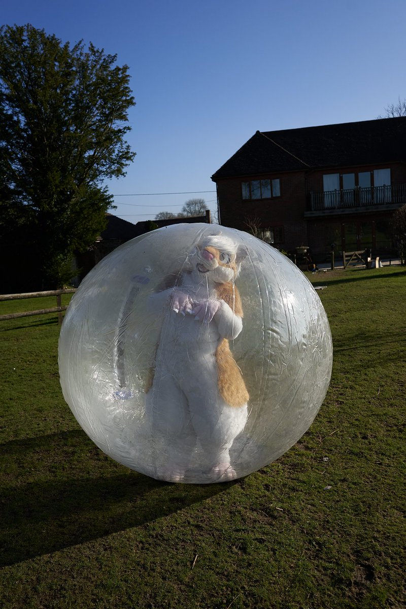 I was gonna wait for #FursuitFriday but I could use a pick me up, by hopefully giving you a pick me up. One off the bucket list - hamster in a ball!