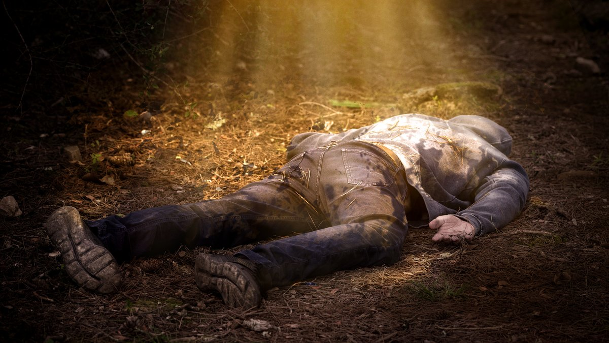 Dappled Sunbeam Wasted On Corpse In Woods