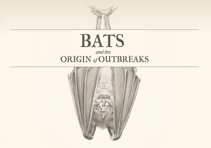 🦇 As the @WHO reaches its findings on the zoonotic origins of the coronavirus, @jhjanicki and @SimonScarr explain why bats make such ideal hosts for disease-causing viruses https://t.co/GZSsH79laS   Illustrations by @CatherineTai5 1/7 https://t.co/0Q73AHmgX7