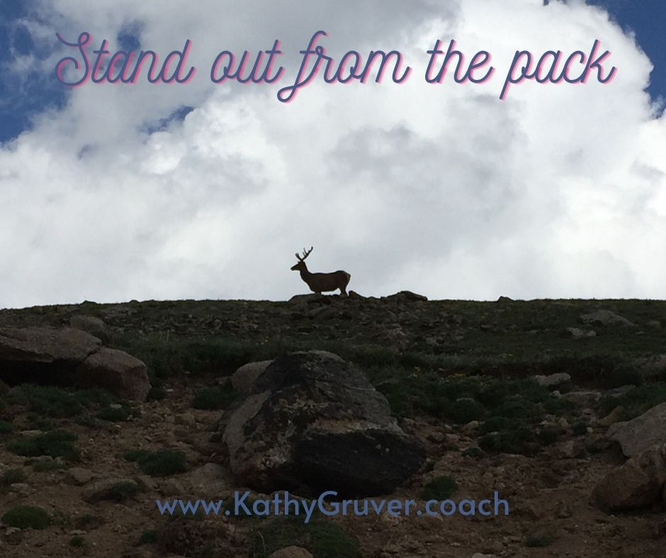 Stand out from the pack  #standout #style #unique #beyou #handmade #beyourself #bedifferent #beunique #resume #beautiful #speaker #author #coach #mindfulness #inspirationalquotes #motivationalquotes