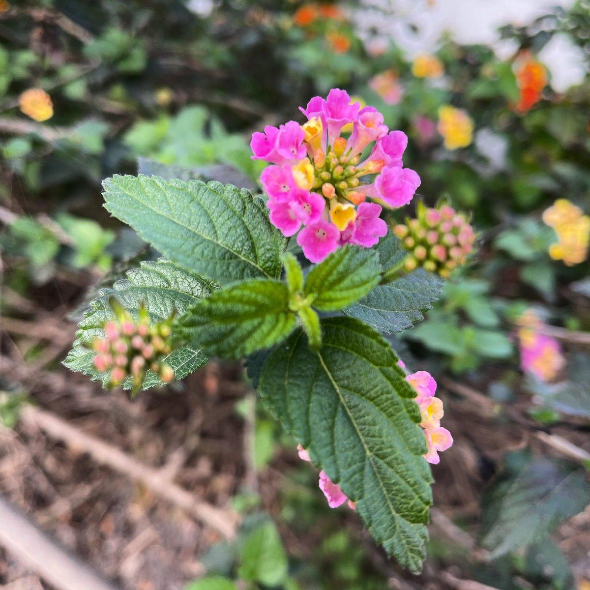 #flores #flowers #primavera2021 #primaveraanticipada #jerez #andalucia #andalucia_photos #spain #picoftheday