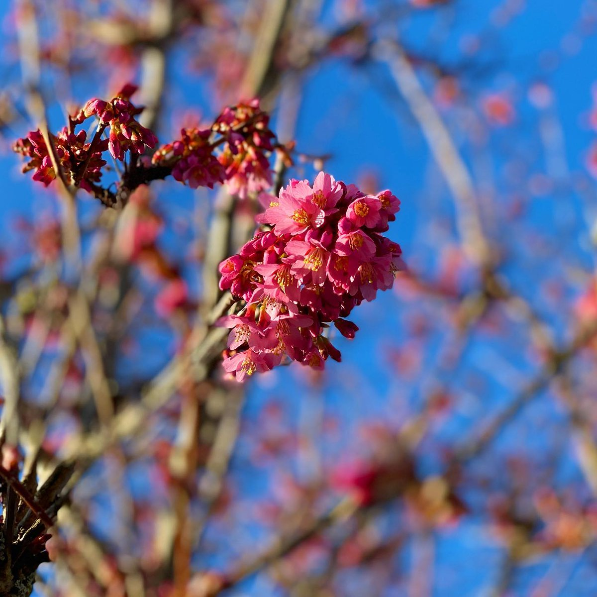 The first shoots (sprouts?) of blossom on my tree! Feeling very bouncy and energetic today, the sun is shining and it's nearly the weekend! Only 1 more week of homeschooling - yay!!!  #blossom #fridayvibes #friday #fridayfeeling #fridaymotivation #bluesky: