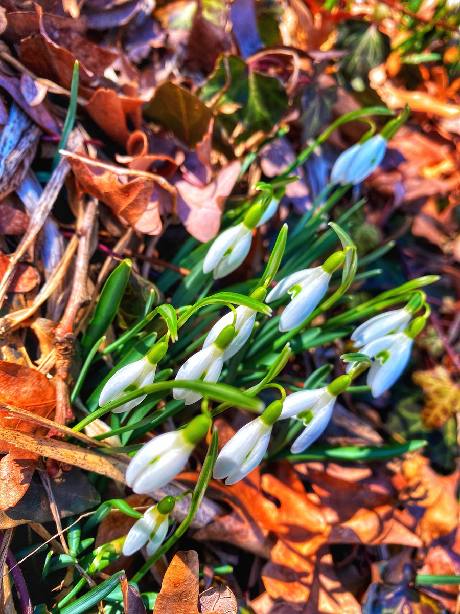Thaw   #AlexandriaVa #NoVa #spring #nature #winter #flowers #Virginia #VA