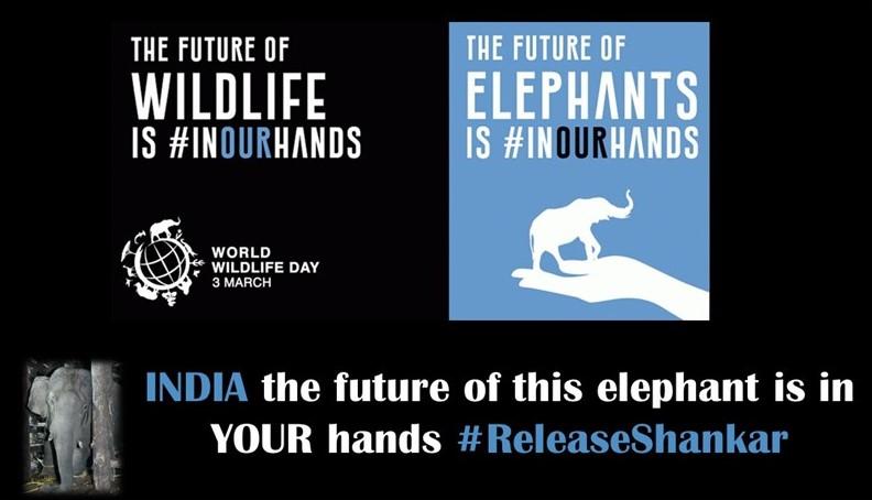 @srinivasanoffl @CMOTamilnadu @narendramodi @PMOIndia removing a wild bull elephant has a detrimental effect on the gene pool which could endanger the very future of wild elephants in Tamil Nadu. STOP #ReleaseShankar  #InYourHandsIndia #WorldWildlifeDay