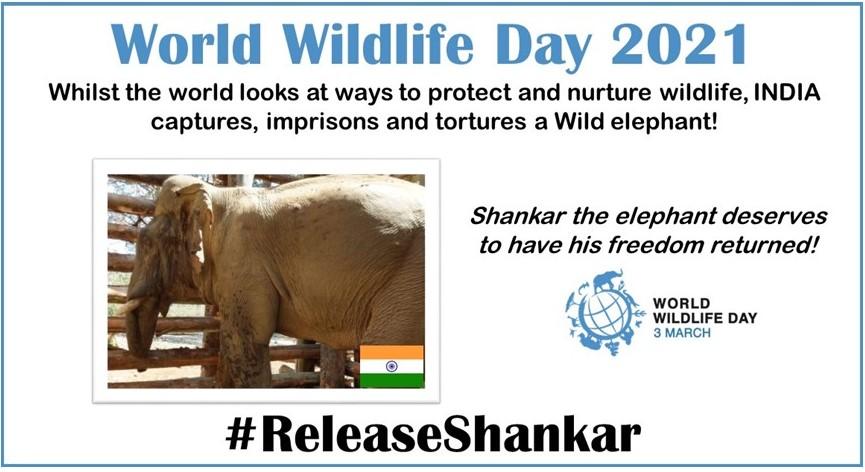 @srinivasanoffl @CMOTamilnadu @narendramodi @PMOIndia Shankar has suffered enough! #ReleaseShankar #InYourHandsIndia #WorldWildlifeDay