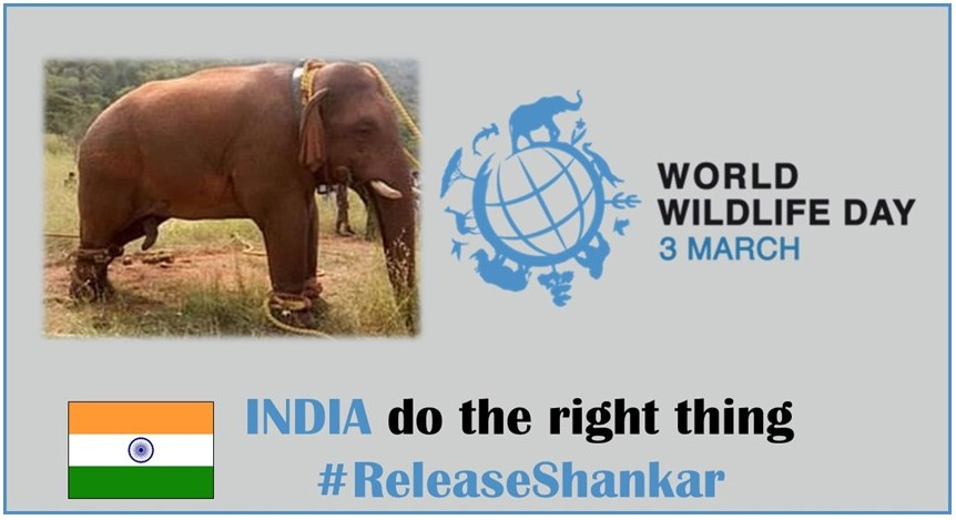 @srinivasanoffl @CMOTamilnadu @narendramodi @PMOIndia Can you imagine the fear, frustration and desperation Shankar feels right now? Do the right thing prove to the world India is a compassionate nation and #ReleaseShankar  #InYourHandsIndia
