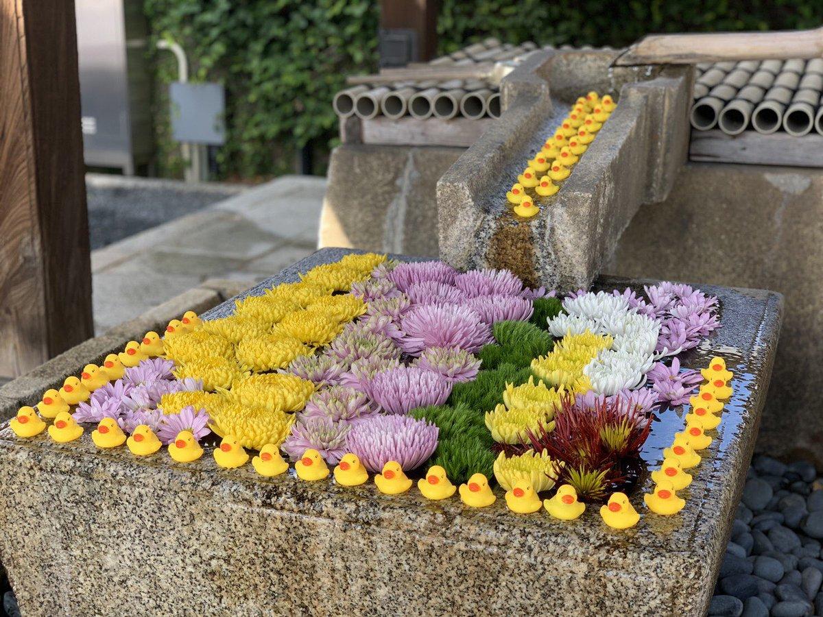 新撰組発祥のお寺の「金戒光明寺」さんにアヒルの大群が寄贈される!世の中、良い人もたくさんいるんですね!