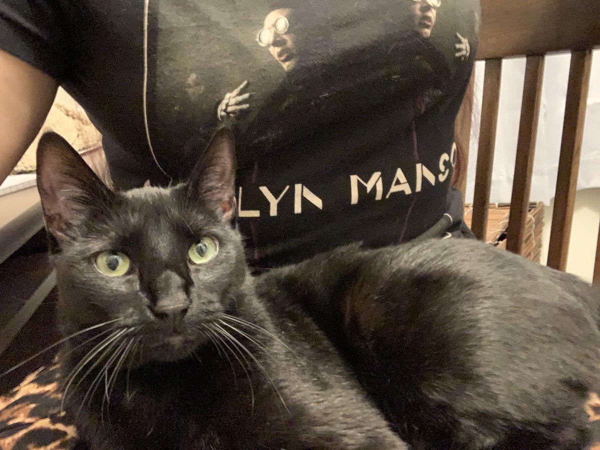 My kitty Luna #MarilynManson #shirt #kittylove #CatsOfTwitter #AdoptDontShop #cute #tuesdayvibe #GoodVibesOnly #cheeringmeup