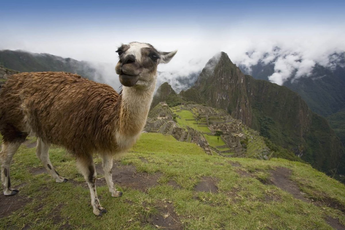 #LosAngeles to Lima, Peru for only $346 roundtrip with @CopaAirlines #Travel (May-Jun dates)    Booking link: