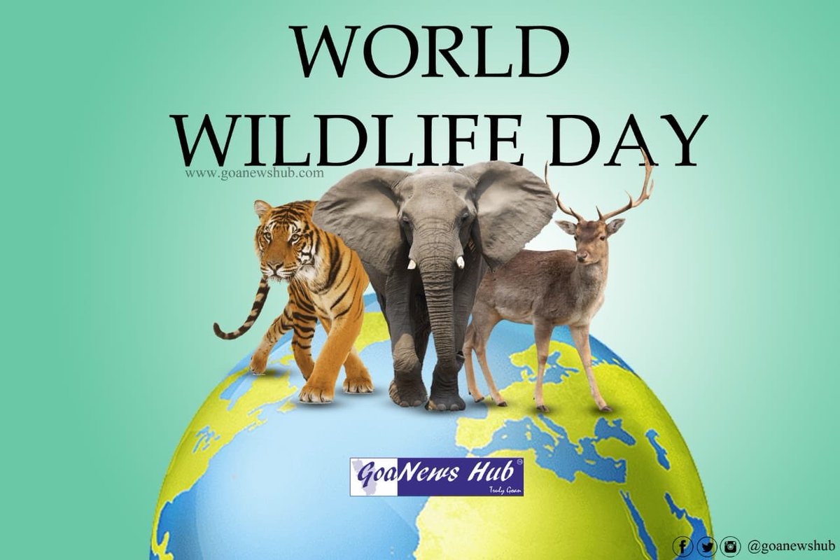 "Wild animals are less wild and more human than many humans of this world"" -Munia Khan  #wildlife #WorldWildlifeDay #nature #Goa #forest #Animal #birdwatching #BirdsSeenIn2021"