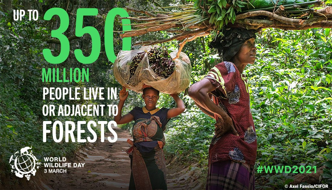 Forest loss,degradation & fragmentation accelerate climate breakdown & biodiversity loss. This threatens the global food & water security & it imperils the safety & the livelihoods of millions of people 🌏 #ForestsPeoplePlanet #WWD2021 #WorldWildlifeDay2021