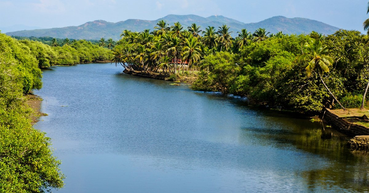 The River Sal winding through lush greenery as it makes its way to the sea.  #river #greenery #sea #beach #vacation #holiday #trip #tourist #winter #spring #sunset #goa #india #guide #palms #hills #mountains #nature #photography #photo #summer #water