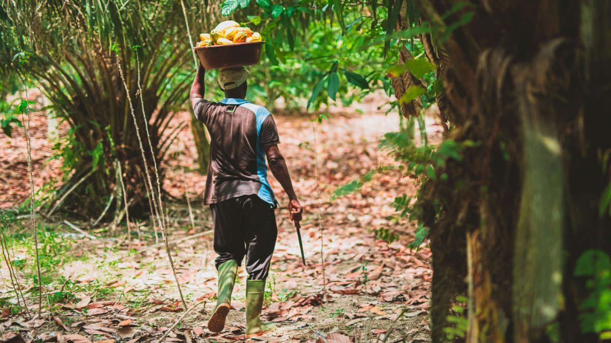 This #FairtradeFortnight, we want you to take 3 simple actions to help change chocolate. Why? Because the 2.5 million families who farm 60% of the world's cocoa earn less than half the global living income reference price. This has to change:  @FairtradeUK