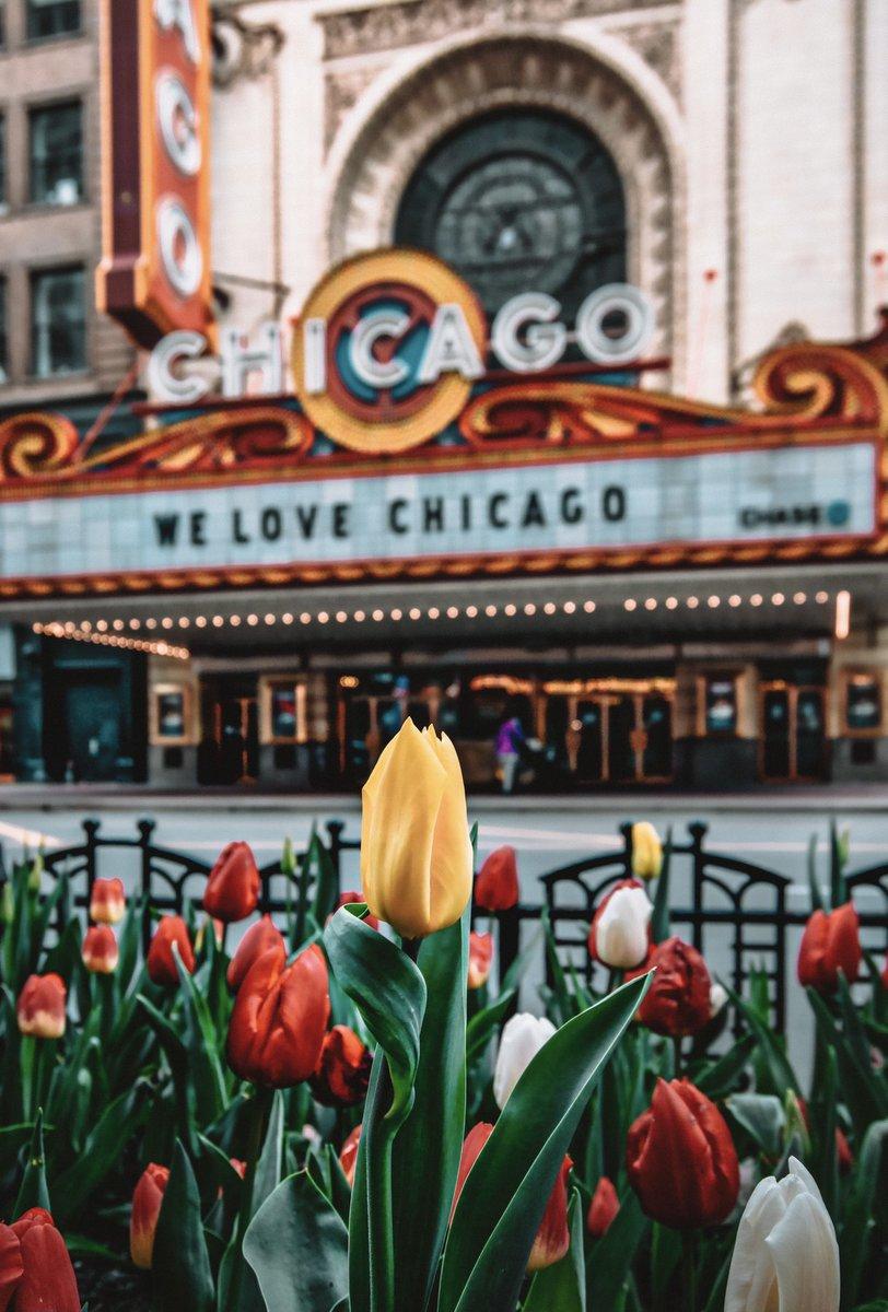 @windsofjane Gorgeous Jane!! I look forward to #Chicago's tulips lining Michigan Ave 😍🌷🌷🌷   #SpringIsComing #Flowers